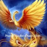 chim-phuong-hoang
